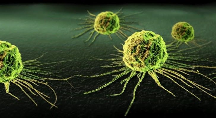 http://i1-news.softpedia-static.com/images/news2/Bacterium-Causes-Tumors-in-Rats-Dogs-and-Even-Humans-to-Shrink-454994-2.jpg