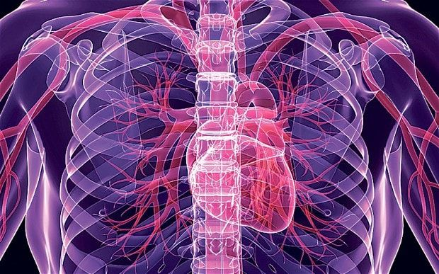 Human body 3D diagram