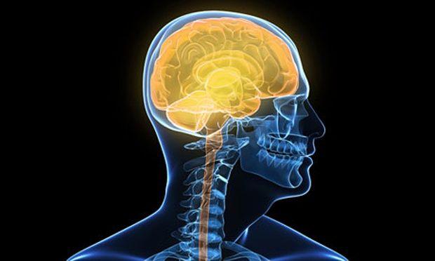 Human-brain-012