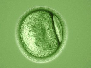 green-cell